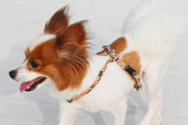 愛犬のしつけ初級編愛犬を知る