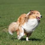 犬_1427957350