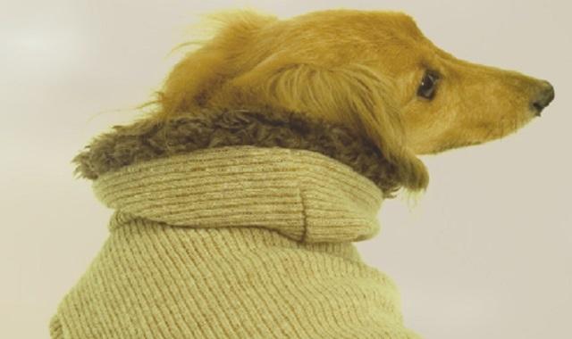 ダックスフンドは、ドイツ語の「アナグマ(ダックス)」から名づけられたとても用途の広い、有用な狩猟犬です。