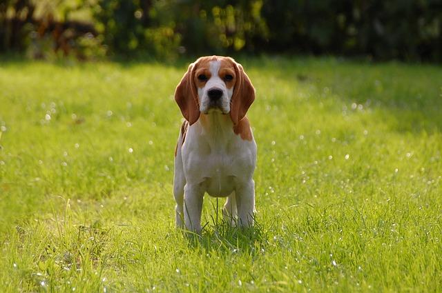 愛犬がストルバイト結石になってしまった場合、どうすればいいですか?