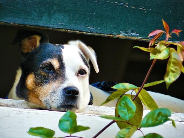 自律神経の乱れで起こる愛犬の体調不良