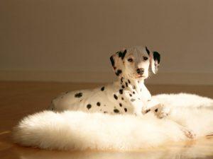【獣医師が解説】愛犬の老犬介護の問題点と準備、心構え