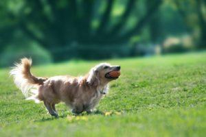 愛犬愛猫の熱中症と応急処置