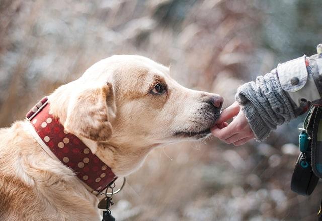 愛犬とふれあい
