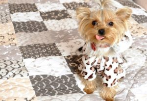愛犬のしつけ初級編 vol.7 愛犬におすわりを教えよう