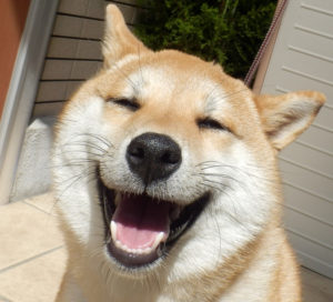 【動画】「はじめて飼うのはどんな犬がおススメ?」犬種は?子犬or成犬?子供への影響は?