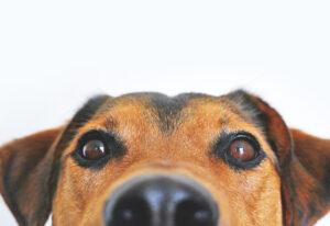 愛犬のしつけ初級編 vol.3 愛犬とアイコンタクトを取ろう