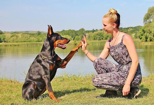 愛犬のしつけ初級編撫でてもらうのが好きな愛犬