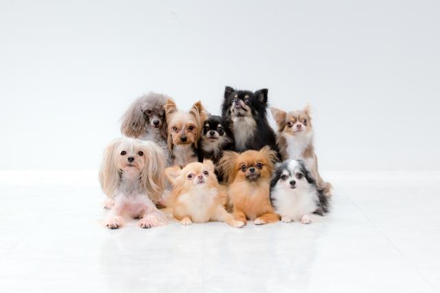 愛犬の食糞とその対策