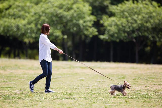 昼間の太陽の下で、適度な散歩や運動などの規則正しい生活を愛犬と