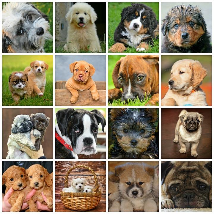 世界各国の人気の犬種 猫種 犬編 犬の総合情報サイト 帝塚山