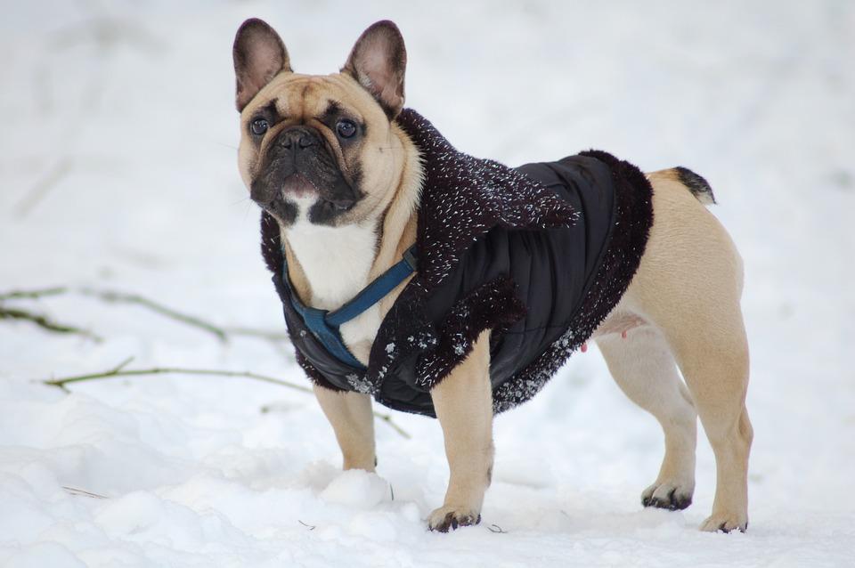 犬は冬が好き 寒さに負けないワン 犬の総合情報サイト