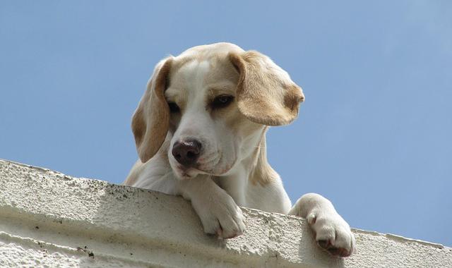 犬_1430113740