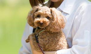【獣医師が解説】老犬が積極的に取りたい栄養素とは