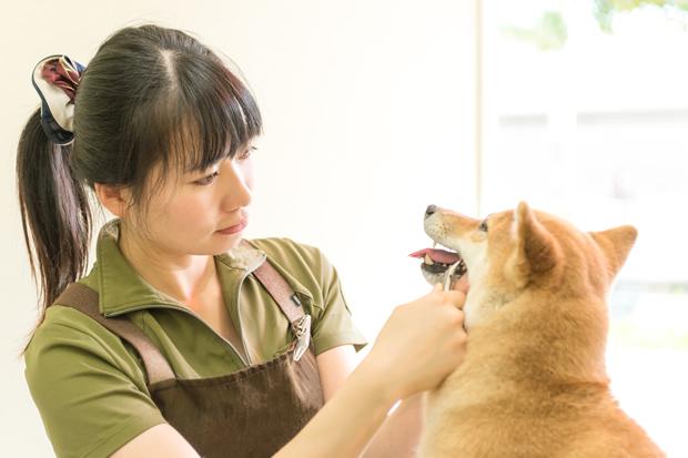 歯石を取る方法。愛犬が20才まで元気に生きるために