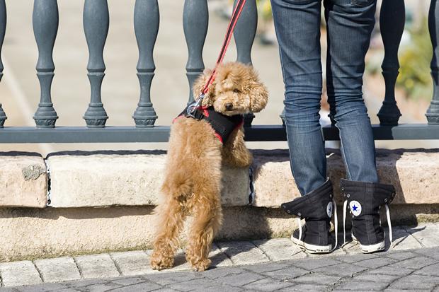 愛犬と日光浴をすることも健康維持には非常に大切です。