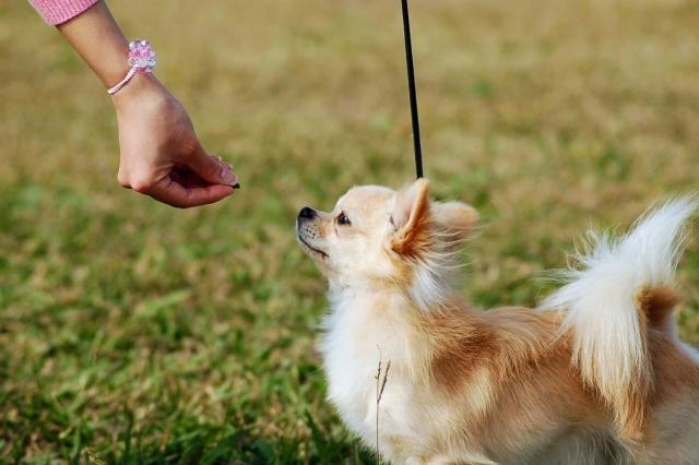 愛犬のご褒美にはおやつが最適です。