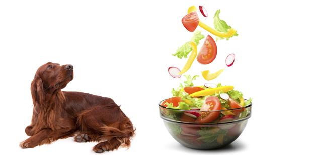 愛犬は野菜の消化が苦手です。