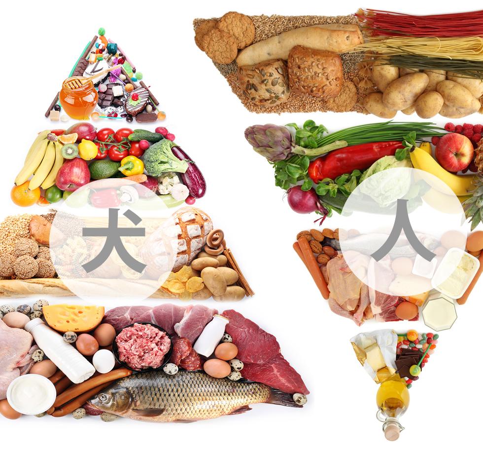犬の主食が肉や魚、卵などのタンパク質類。人間の主食が米やパンなどの炭水化物類。