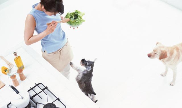 記事 愛犬のための健康的な野菜の与え方