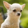 子犬との我慢比べは「うるさい!」と叫んだ時点で負け。