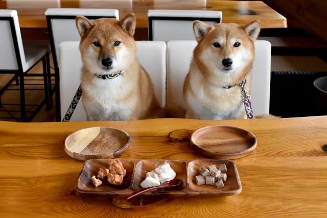 愛犬の正しい食事でうんち