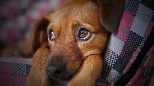 【獣医師が解説】ペットの栄養編: テーマ「腎臓ケアとリンのコントロール」