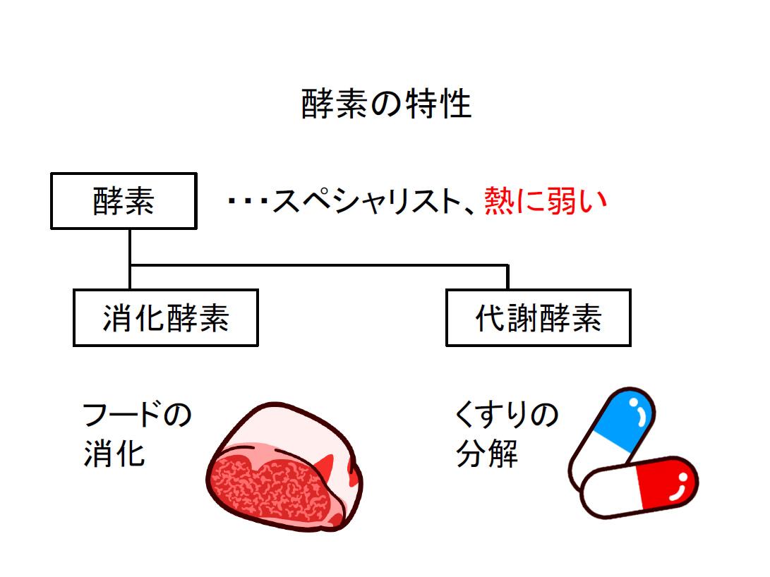 分解 酵素 タンパク質